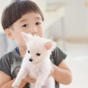 小さい子供と犬